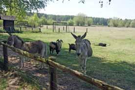 Haustierpark Liebenthal