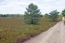 Kyritz-Ruppiner Heide