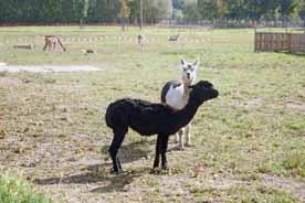 MAFZ Erlebnispark Paaren
